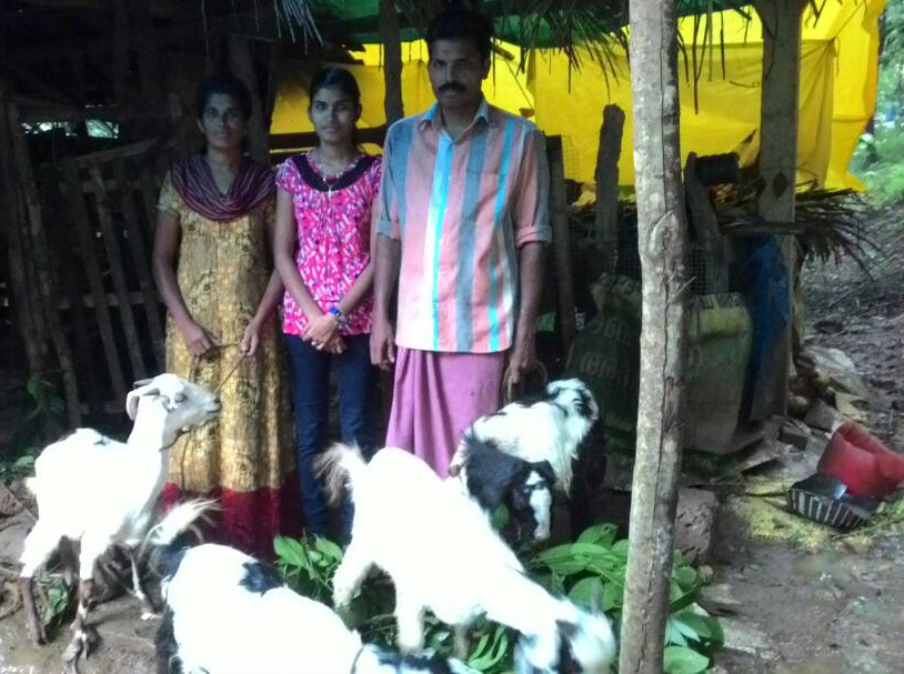 donating can help provide valuable livestock to families in India