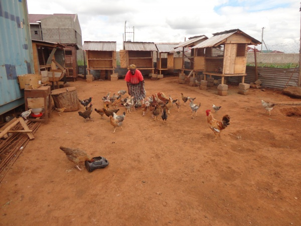 Chickens on the brothers property - Kenya