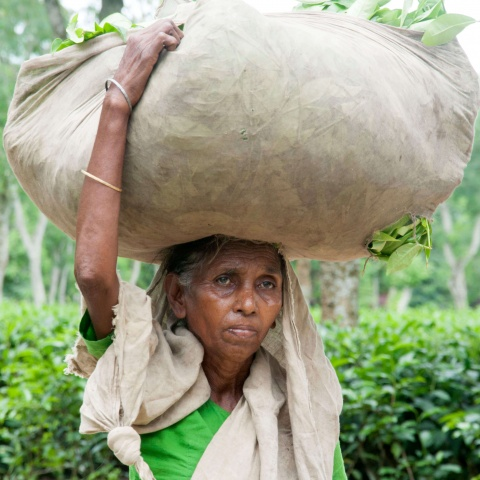 Bangladesh - 10 million people live in this region of Bangladesh, and 64% of them work in tea plantations