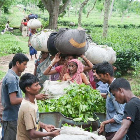 Bangladesh - Most tea laborers are born on tea garden grounds and live their whole lives there. Most are illiterate and are never given the opportunity to get a quality education.