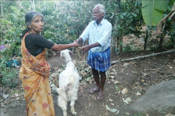 Goat recipient