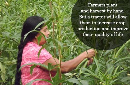 Sri Lanka farmers pick by hand